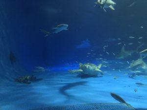 ⭐︎しまね海洋館アクアス⭐︎MIYA21