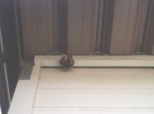 蜂の巣!!!